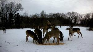 NC-239WF-DeerFightTest